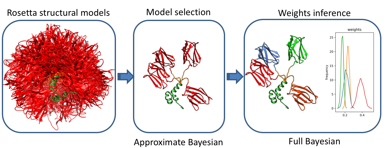 Bayesian inference of protein conformational ensembles from limited structural data