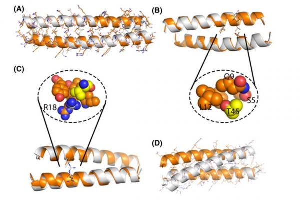 Computational assessment of folding energy landscapes in heterodimeric coiled coils