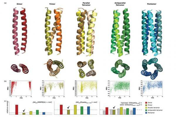 Exploring alternate states and oligomerization preferences of coiled-coils by de novo structure modeling